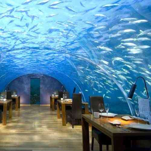 Three restaurants to eat between fish go restaurants for Ithaa prices